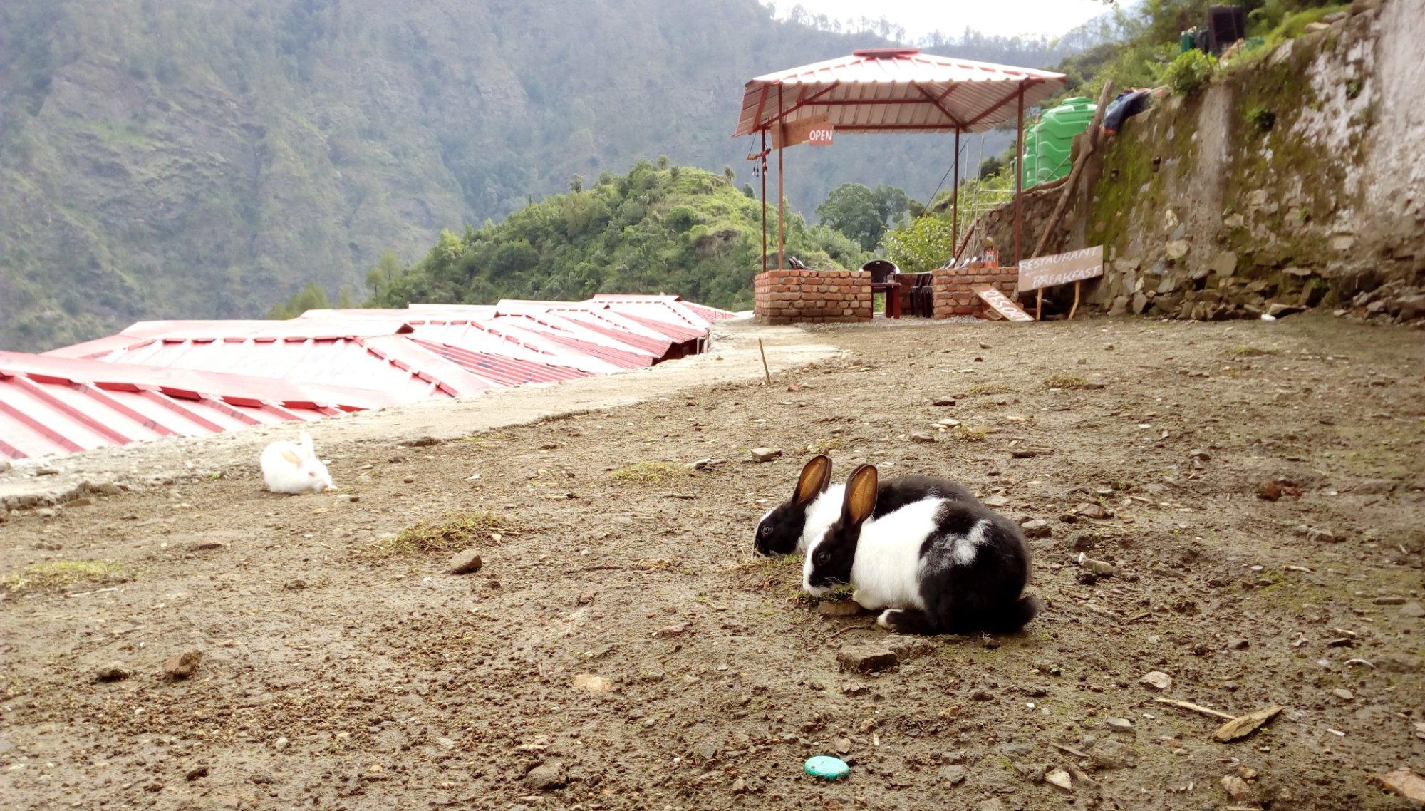 yatra-hill-resort-phata
