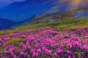 CHARDHAM YATRA VALLEY OF FLOWER EX DELHI